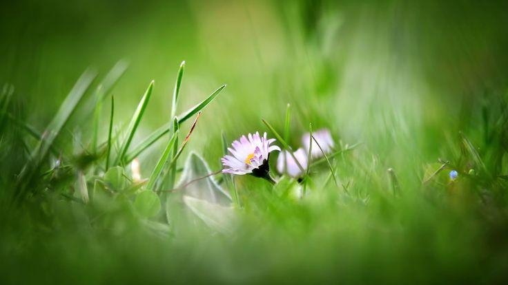 #Flowers #Summer