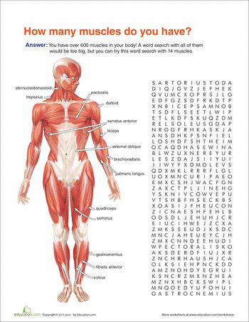 35 best Functional Anatomy & Physiology images on Pinterest ...