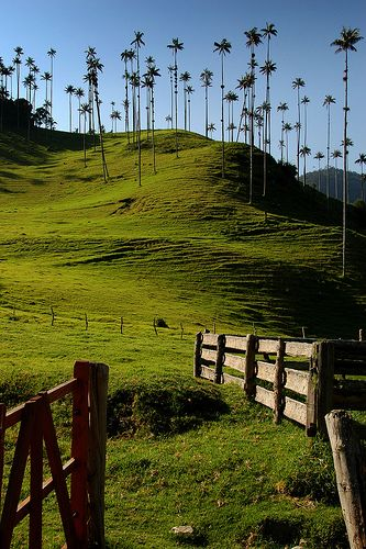 Salento, Colombia - Valle de Cocora, this view makes the trek worth it.. and…
