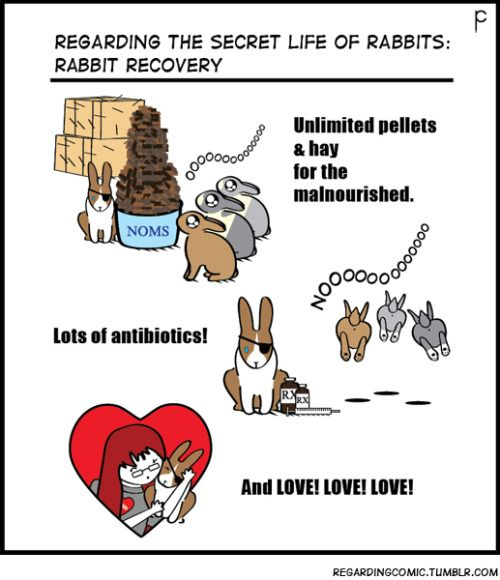 RX of LOVEThe next few weeks will chronicle an all-too-familiar story regarding pet store rabbits. (To buy, or not to buy … that is the question). This is PET STORE POLITICS or WASH, RINSE, REPEAT.
