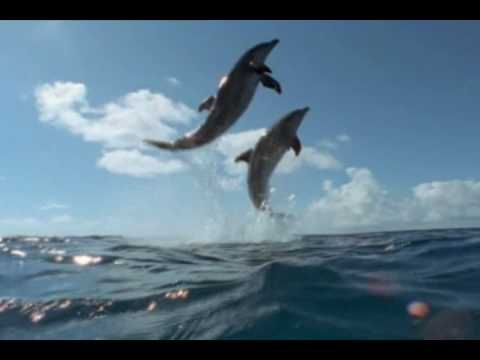 Cool Change, Little River Band  (-love this video-  the music video features dolphins and whales in their natural environment)