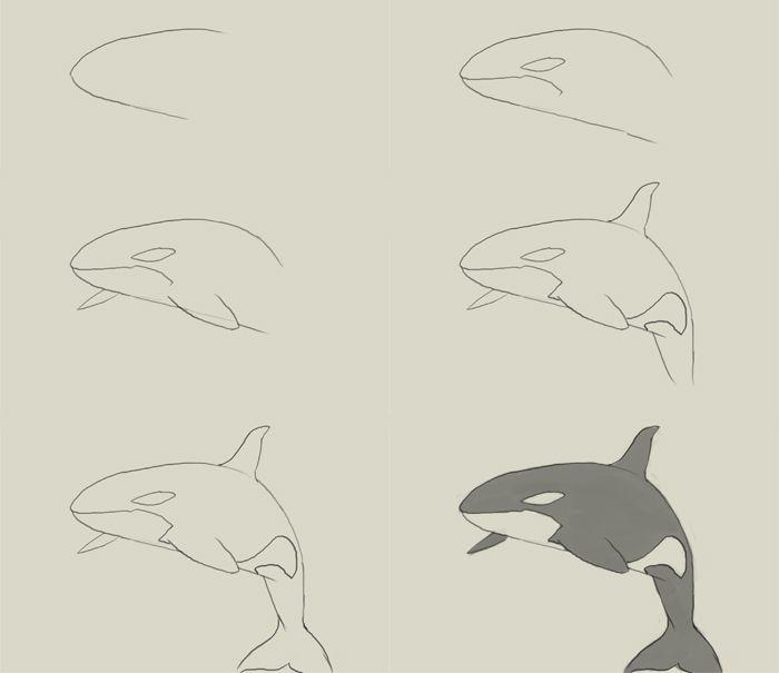How to draw a killer whale step by step | Davison Art ...