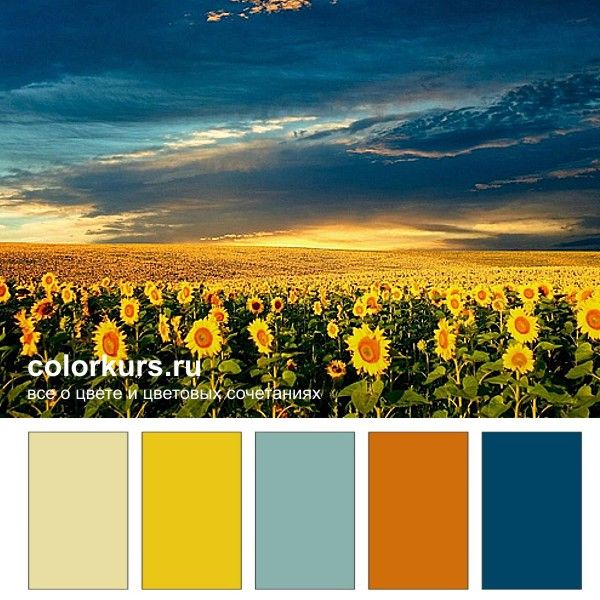 55 best plants to beware images on pinterest poisonous plants sunset over the sunflower fields in bulgaria one of the most beautiful sunsets on earth that many bulgarians see but can not feel the encha fandeluxe Image collections