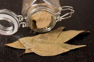 Tratament naturist cu frunze de dafin