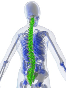 Studies Show Promise that Dental Stem Cells May Someday Treat Spinal Cord Injury