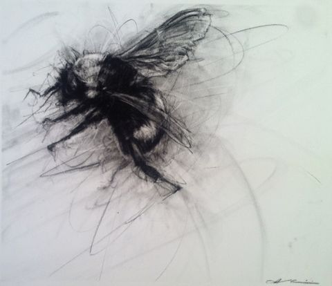 Imogen Gallery Charcoal on Paper - april coppini