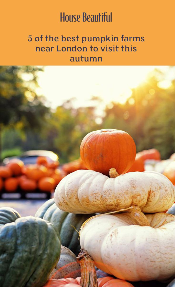 These are the pumpkin patches near London to visit this autumn. From Surrey to Tunbridge Wells, spend the weekend pumpkin picking at these nearby farms. Pumpkin Farm, Best Pumpkin, Best Holiday Destinations, Pumpkin Picking, Farming S, Halloween Activities, Autumn Inspiration, Garden Furniture, Farms