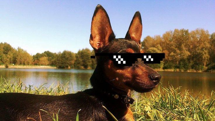 Poradnik ośmielania częstochowian został przygotowany z myślą o tych, którzy chcieliby zagadać, ale nie wiedzą jak. Psy i Częstochowa to świetne połączenie.