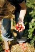 Erdbeeren pflücken und Blumen schneiden   Gut Wulksfelde
