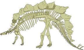 Znalezione obrazy dla zapytania dessin squelette dinosaure