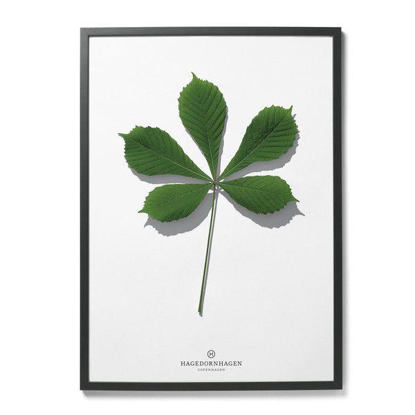 plakat Hagedornhagen - liść | Designzoo