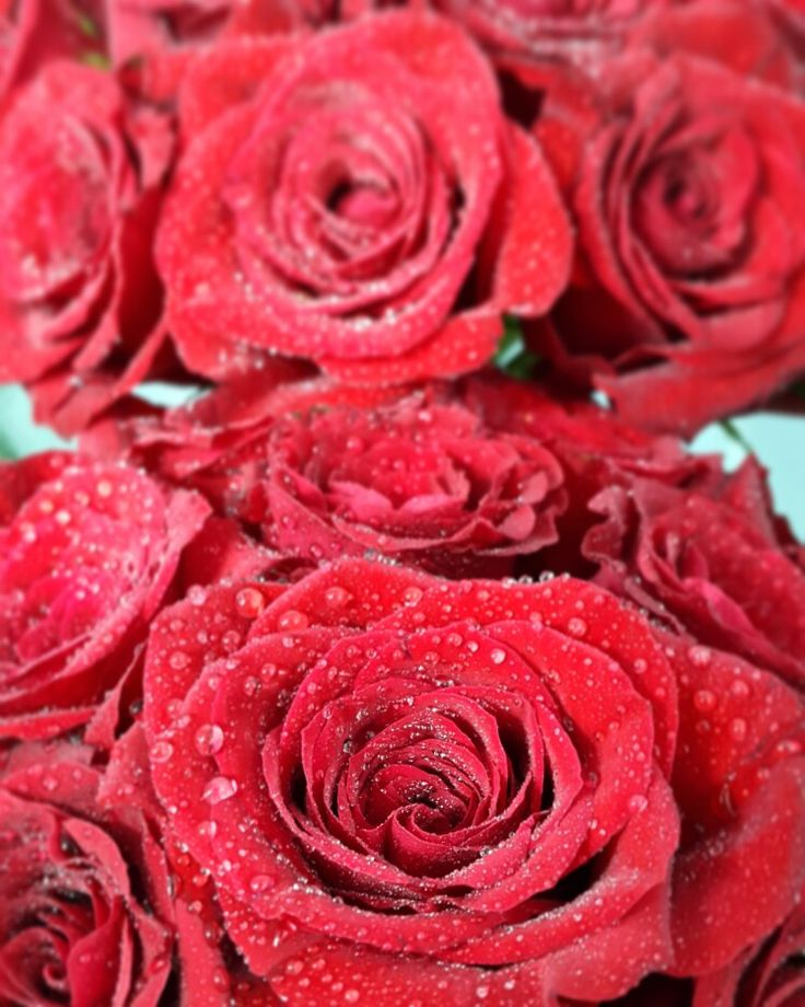 Red Rose Arrangements done by Functions For Africa #bridesbouquet #bridalflowers...