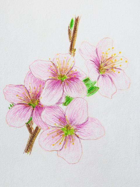 Colored pencils Faber-Castell Polychromos. Paper Daler Rowney 160 g/m2