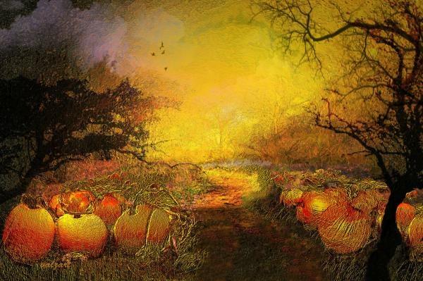 Pumpkin patch'