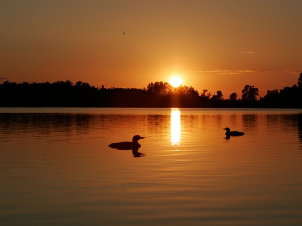 Love the tranquil sunset with the loons on the lake ...