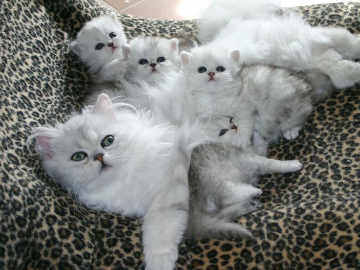 """* * """"If yoo must know; the kitten up front here iz NOT adopted."""""""
