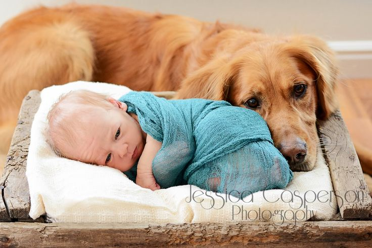 Jessica Casperson Photography, newborn, baby boy, baby and dog