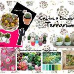 Terrariums: Cactus and Suculentas Indoor Gardens