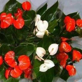 цветы женское счастье и мужское счастье