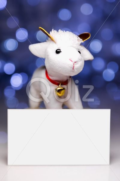 Qdiz Stock Photos | Sheep with blank card,  #2015 #asia #background #blank #blur #blurred #card #celebrate #celebration #character #china #chinese #clear #closeup #concept #culture #decoration #doll #east #empty #ewe #festival #festive #figure #fun #funny #greeting #holiday #japanese #jumbuck #lamb #light #little #mutton #new #religion #sheep #small #symbol #toy #tradition #traditional #white #year #zodiac