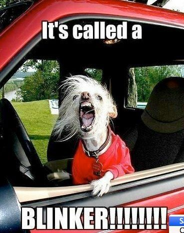 Road RageRoads Rage, The Roads, Pets Peeves, Pet Peeves, So True, Too Funny, So Funny, Totally Me, Can'T Stop Laughing