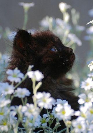 Chat et marguerites