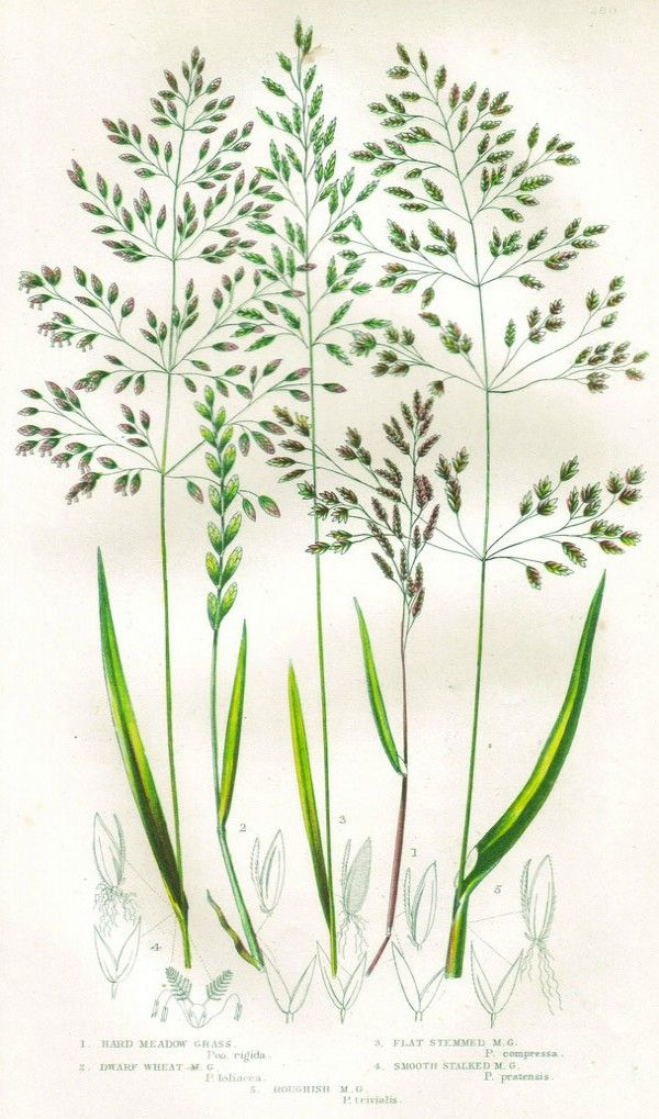 garden weeds clipart - photo #42