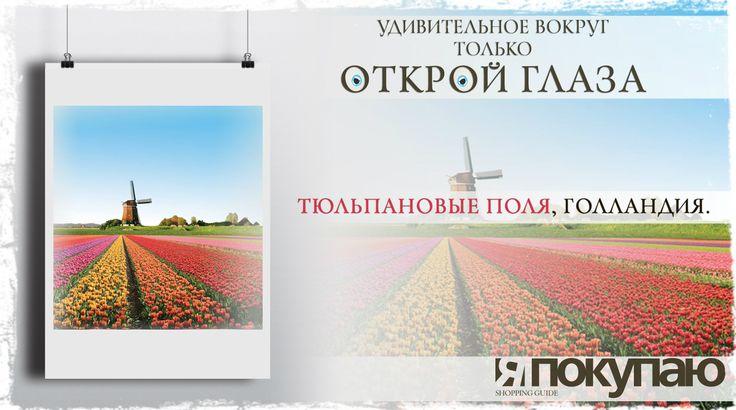 Тюльпановые поля, Голландия. http://yapokupayu.ru