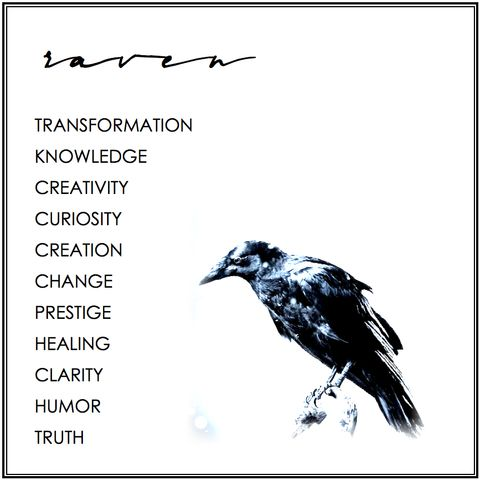 RAVEN-Transformation, knowledge, creativity, curiosity, creation, change, prestige, healing, clarity, humor, truth