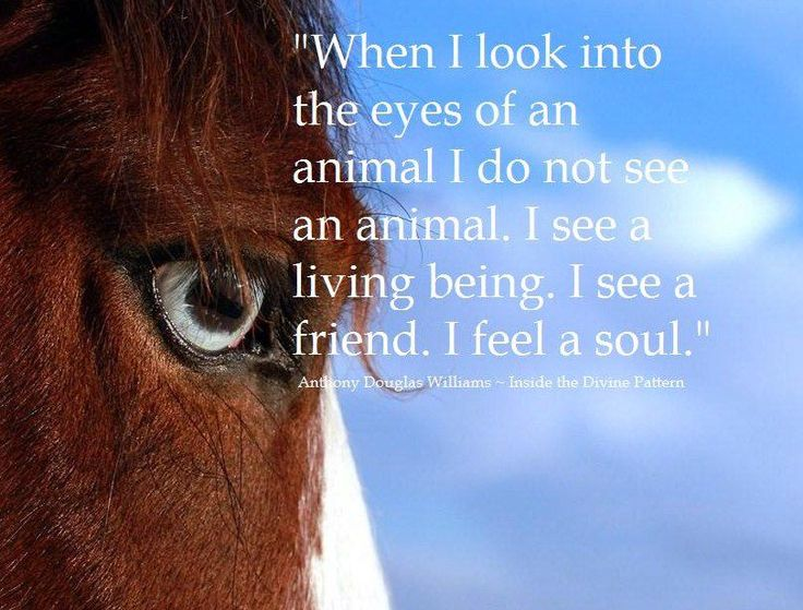 100 best images about inspirational animal quotes on - Animal pak motivational quotes ...