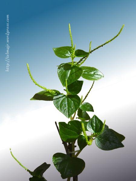 Ms de 25 ideas increbles sobre Plantas silvestres en Pinterest