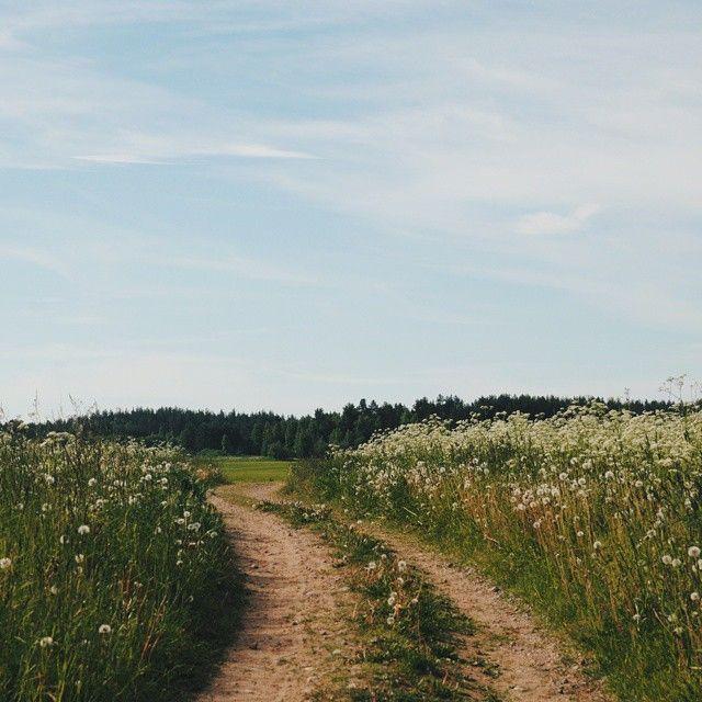 von Grund auf // Blumen // Feld // Ästhetik // Fotografie // Natur // …
