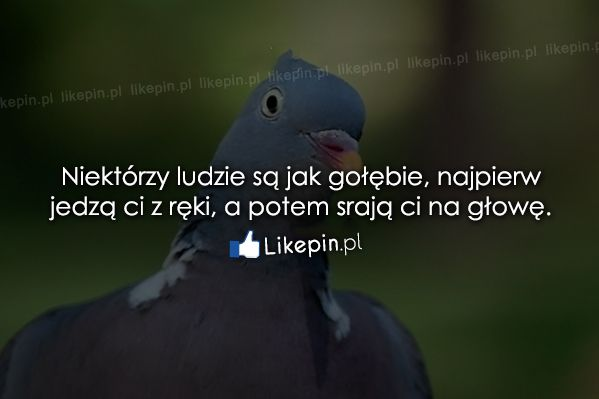 Niektórzy ludzie są jak gołębie... - Likepin.pl