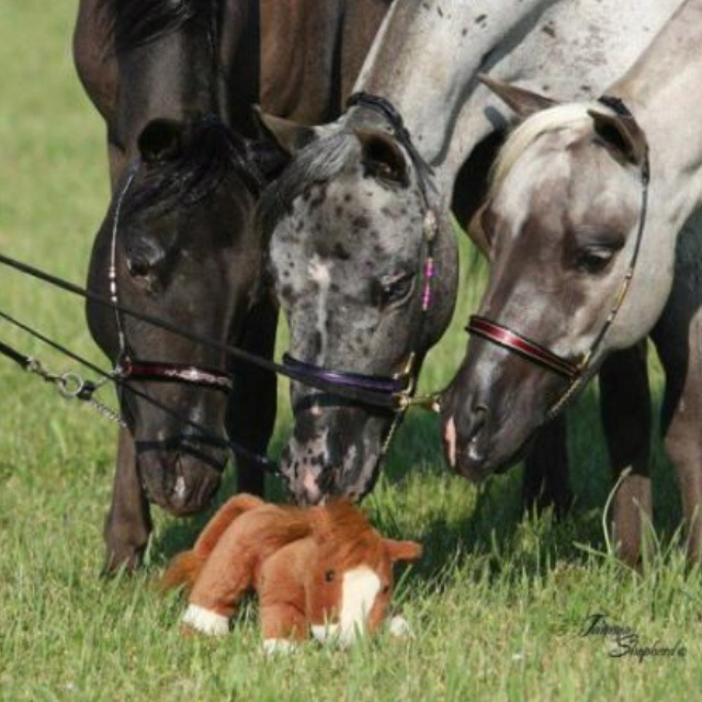 hehe: Friends, Equine, Funny Horses, Stuffed Hors, Grey, New Baby, Drinks, Minis Horses, Animal