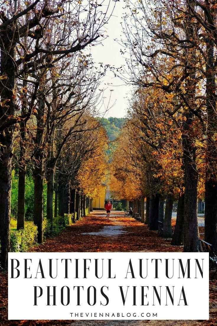 Vienna beautiful autumn photos, wonderful fall photography, Vienna Austria #autumn #fallphoto #fall #fall2017 #vienna #viennacity #theviennablog #photography #naturelovers #naturephotography #austria #nature #sunset #trees #colorful Autumn cozy