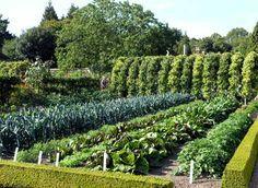 Огород. Уплотненная посадка