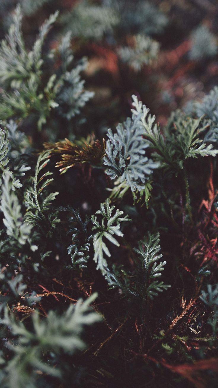 2160x3840 Обои растение, листья, крупным планом