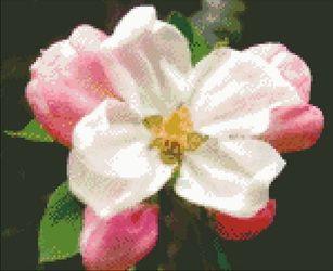 Cross-stitch Flowers - Cross-stitch Patterns