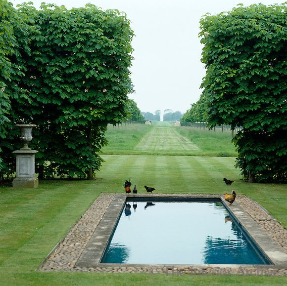 Hens strut around the edge of the pool which looks out past the gap in the beech trees to the fields beyond. Designer/Stylist: David Hicks