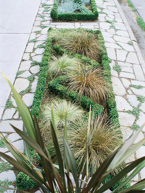 17 best images about garden sidewalk on pinterest for Short landscape grasses