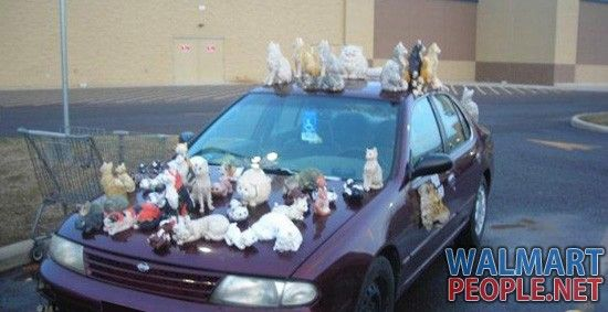 Crazy cat lady at walmart lols.. for more walmart people visit: http://walmartpeople.net