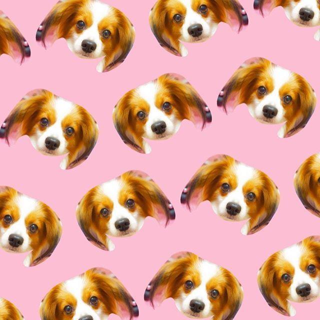 日間賀島picの途中ですが、、、 流行りの #patternator をやってみました ここたんがいっぱい〜 とりあえず試しに作ってみたけど 並べすぎてバランス失敗して きもちわるいってダメ出しされました笑 #画像 #加工アプリ #画像加工 #加工画 #愛犬 #犬 #わんこ #パピヨン #たれみみ #おとぼけ #とぼけ顔 #かわいい #いぬすたぐらむ #わんすたぐらむ #いぬら部 #犬バカ部 #癒しわんこ #うちのわんこ #instapic #photogram #lovemydog #papillon #cutedog #lovely #mydogiscutest #dogstagram #instadog #picture #kawaii