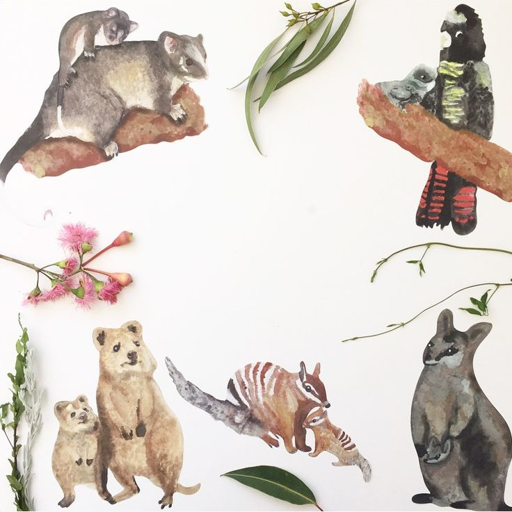 Our threatened species wall decals from Wondermade are an eco-friendly, woven, non-toxic fabric style decal that has a similar feel to fine weave canvas. They are easy to apply, repositionable, reusable, and the low tack water based backing will not leave a sticky residue. Decals are roughly A5 in size.  All decals come with an information sheet about the species and part proceeds go to Kanyana Wildlife Rehabilitation Centre www.kanyanawildlife.org.auStandard shipping is free in Australia…