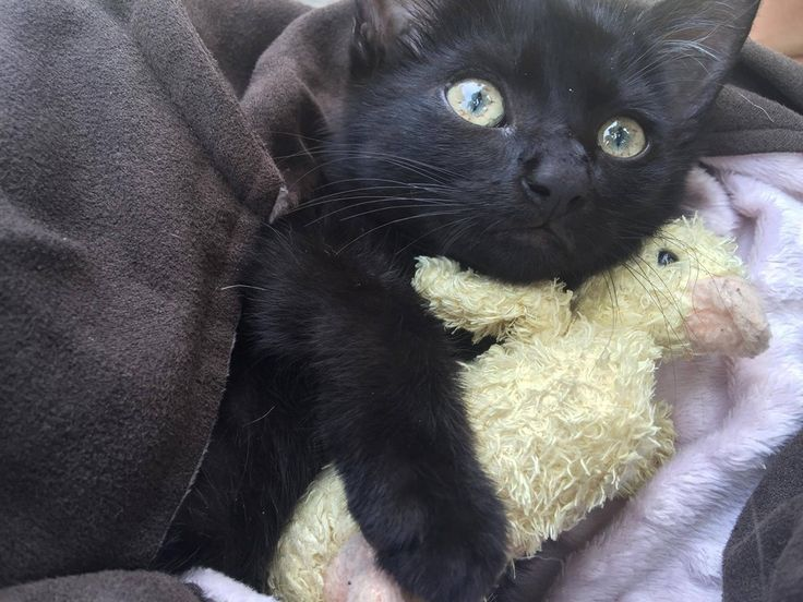 """A crying kitten was hanging onto oysters on a piling of the Roosevelt Bridge (in Stuart, Florida), struggling to stay afloat. A Martin County Deputy came to the rescue and pulled the tiny distressed kitten out to safety.Photo: Martin County Sheriff's Office""""It's not a typical water rescue, but this ..."""