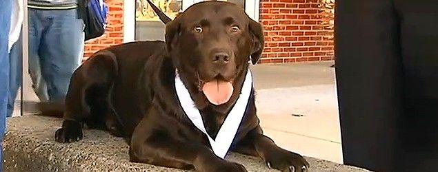 Stray dog beats 1,228 runners in a half-marathon. (WFIE News)