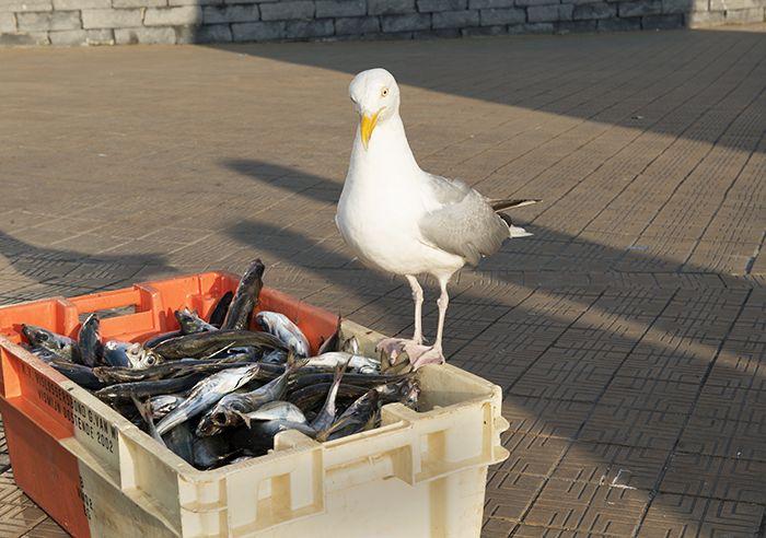 Oostende in het kielzog van de meeuwen - Nomad & VillagerIk hou niet van de kust en uitgerekend mij sturen ze naar Oostende. De geur van vis, vermengd met zonnebrandolie, verdraag ik slecht. Het gekrijs van de meeuwen jaagt me angst aan. www.nomadandvillager