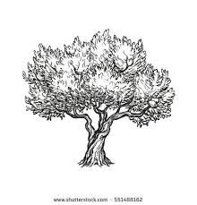Image result for olive tree graphic