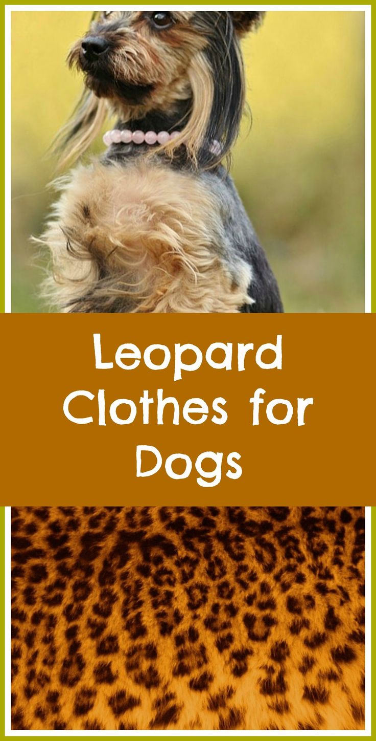 Functional and fashionable leopard clothes for dogs.