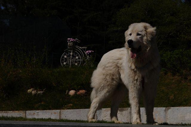#Teseo a Le Pinete #LePinete #B&B #zen #relax #holiday #italy #viggiù #garden #hotel  #events #cat #dog  #bedandbreakfast