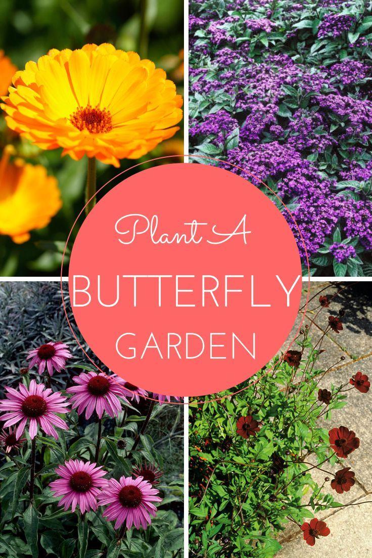 20 Flowers For A Butterfly Garden